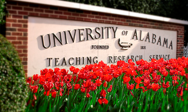 UA sign with crimson and white tulips
